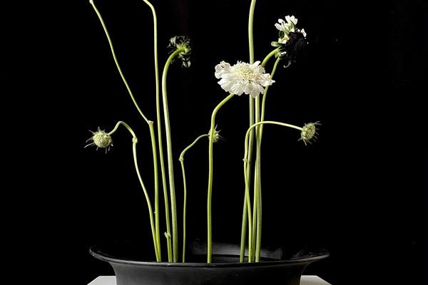 cut floral studio
