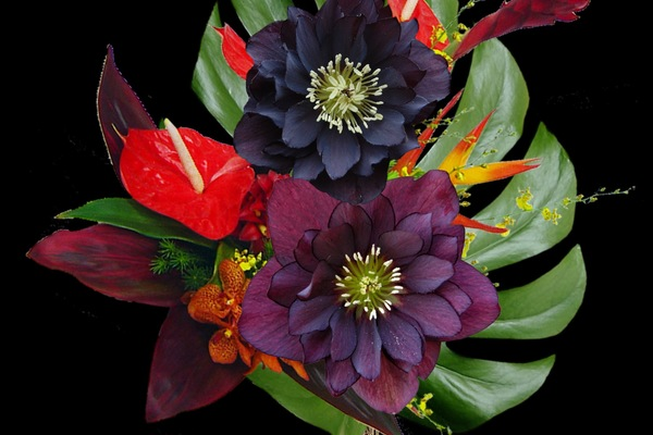Tino Monetti {Lo-Fi Floral}