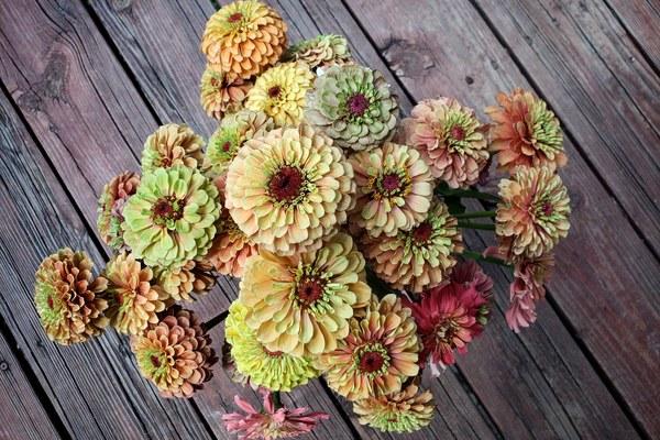 Petal & Thorn Flowers